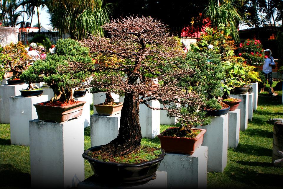Quel arbre doit on choisir pour un petit jardin cr ole atelier d co cr ation - Quel arbre pour petit jardin ...